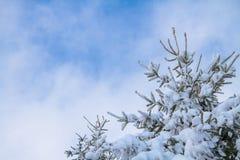 Sneeuwpijnboomboom onder blauwe bewolkte hemel stock afbeeldingen
