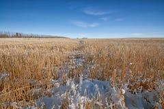 Sneeuwprairielandschap Royalty-vrije Stock Afbeeldingen