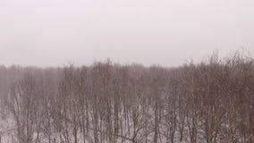 Sneeuwroezen stock video