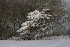 Sneeuwscène Royalty-vrije Stock Foto