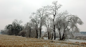 Sneeuwscène Royalty-vrije Stock Fotografie