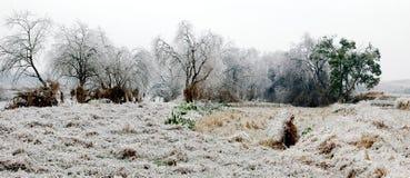 Sneeuwscène Stock Afbeeldingen