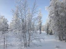 Sneeuwscène in de winterbos Stock Fotografie