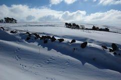 Sneeuwscène dichtbij Allendale, Northumberland, Engeland Stock Foto's