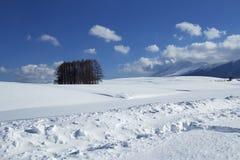 Sneeuwscène in Japan Stock Afbeeldingen