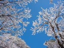 Sneeuwscène op huangshan berg Stock Afbeeldingen