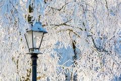Sneeuwscène van een straatlantaarn en bomen Royalty-vrije Stock Afbeeldingen