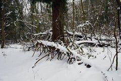 Sneeuwscènes in Schotland stock afbeelding