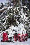 Sneeuwschoenen en een rugzak die zich dichtbij spar bevinden Stock Afbeeldingen