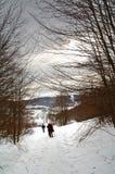 Sneeuwschoenen in het bos stock afbeeldingen