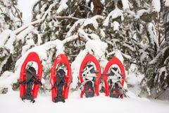 Sneeuwschoenen in het bos Royalty-vrije Stock Foto