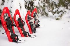Sneeuwschoenen in het bos Royalty-vrije Stock Fotografie