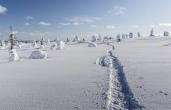 Sneeuwschoenweg Royalty-vrije Stock Foto's