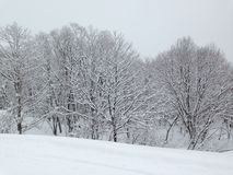 Sneeuwscène Royalty-vrije Stock Foto's