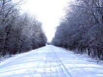 Sneeuwscootersleep in het hout royalty-vrije stock fotografie