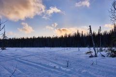 Sneeuwscootersporen in sneeuw Royalty-vrije Stock Foto's