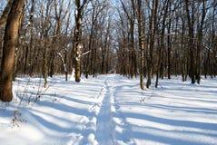 Sneeuwsleep in het bos royalty-vrije stock afbeelding