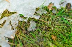Sneeuwsmeltingen op het gras in de lente Royalty-vrije Stock Fotografie