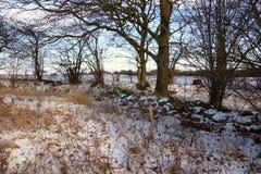 Sneeuwsteenmuur in de winterbos Stock Foto