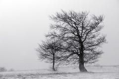 Sneeuwstorm Stock Afbeeldingen