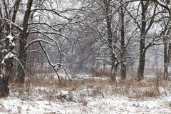 Sneeuwstorm Stock Afbeelding