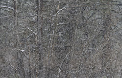 Sneeuwstorm, Royalty-vrije Stock Foto's