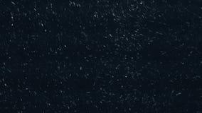 Sneeuwstorm bij nacht stock videobeelden