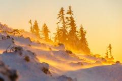 Sneeuwstorm met zonsondergang warm licht op de babiaberg in zuiden Royalty-vrije Stock Foto