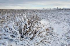 Sneeuwstruik op kustmeer Baikal met bruine kiezelstenen Stock Foto