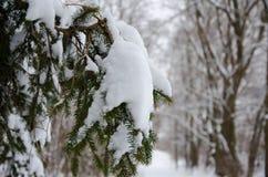 Sneeuwtak Stock Foto's