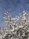 Sneeuwtakken tegen de hemel Royalty-vrije Stock Afbeelding