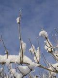 Sneeuwtakken tegen de hemel Royalty-vrije Stock Fotografie