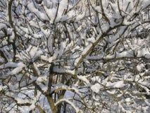 Sneeuwtakken tegen de hemel Royalty-vrije Stock Foto