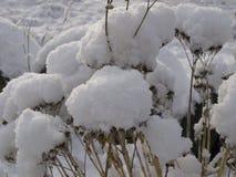 Sneeuwtakken tegen de hemel Stock Fotografie