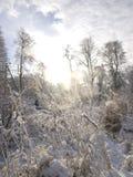 Sneeuwtakken tegen de hemel Stock Afbeeldingen