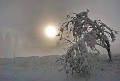 Sneeuwtaksilhouetten van bomen met glanzende zon in mist royalty-vrije stock foto