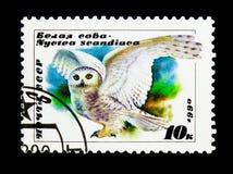 Sneeuwuil (Bubo-scandiacus), serie, circa 1990 royalty-vrije stock afbeeldingen