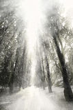 Sneeuwval Royalty-vrije Stock Afbeeldingen