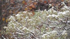 Sneeuwval in de vroege winter in een tuin stock footage