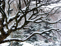 Sneeuwval en boom Royalty-vrije Stock Foto
