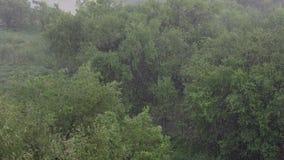 Sneeuwval en zware regen in de zomer Op achtergrond zijn groene bomen, gras, weg stock footage