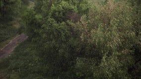 Sneeuwval en zware regen in de zomer Op achtergrond zijn groene bomen, gras, weg stock video
