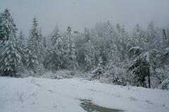Sneeuwval in het bos de Wintersprookje Stock Foto