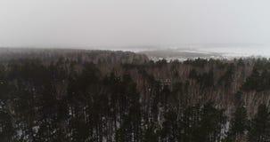 Sneeuwval in het de winterbos stock footage
