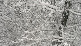 Sneeuwval in het Dichte Bos stock videobeelden