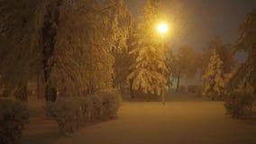 Sneeuwval in het park, Parklamp bij nacht stock video