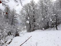 Sneeuwval in hout royalty-vrije stock afbeelding