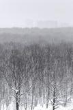 Sneeuwval over het bos van het stadspark in de winter Stock Afbeeldingen