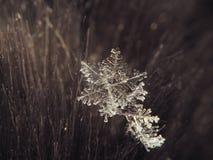 Sneeuwvlok groot op de grijze achtergrond royalty-vrije stock foto