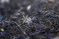 Sneeuwvlok Natuurlijke Extreme Macro royalty-vrije stock fotografie